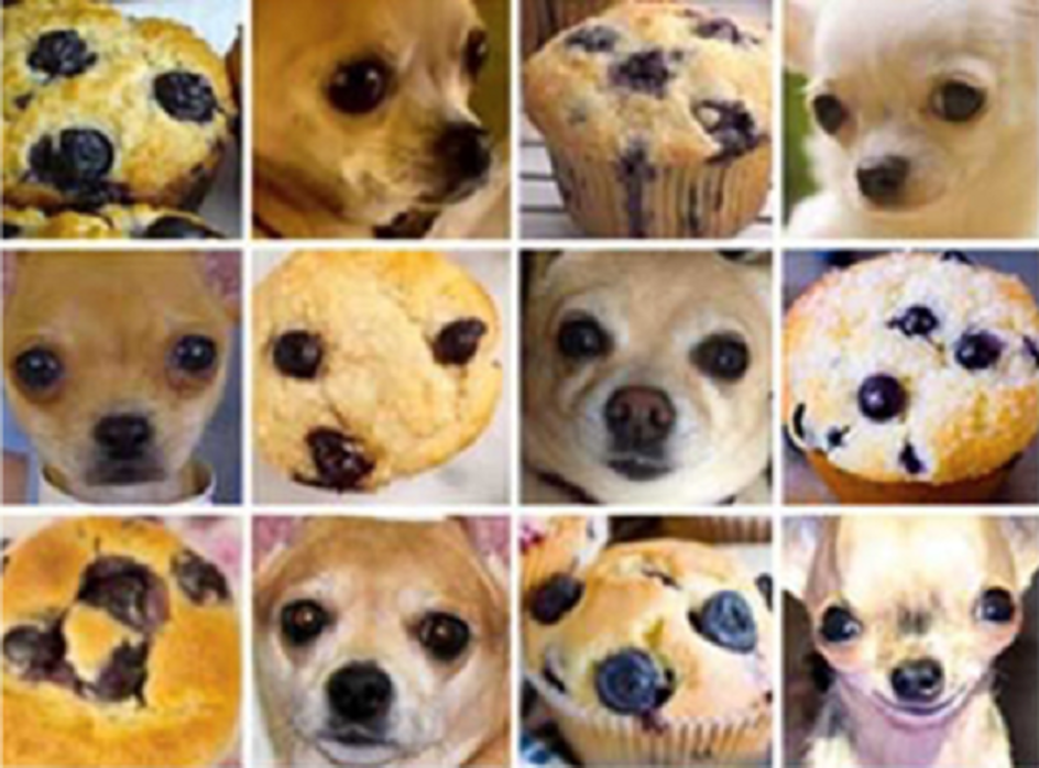 muffins and dogs